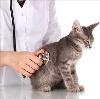 Ветеринарные клиники в Кожевниково